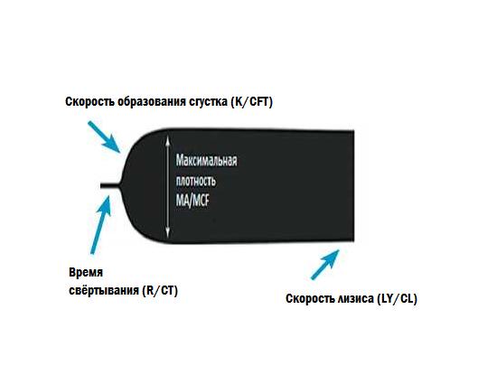 Тромбоэластограмма и основные ее показатели TEG/ROTEM